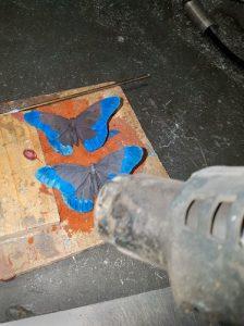 patineren vlinder Davinci verwarmen