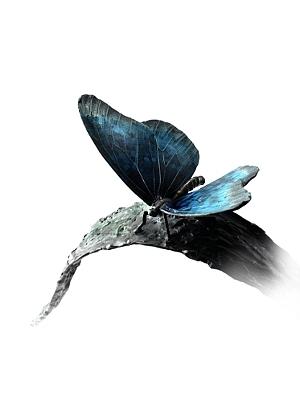 Atelier Davinci beeld vlinders op riet.